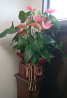 190717 橋元さんから祝花