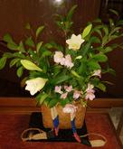 190619 迎え花