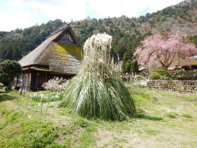 美山にて201904-5