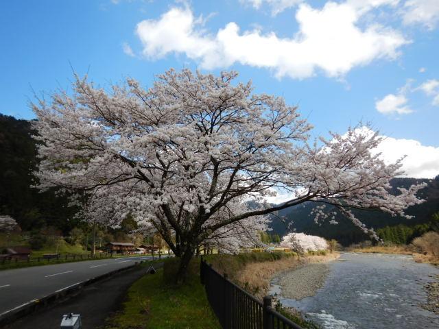 美山にて201904-13
