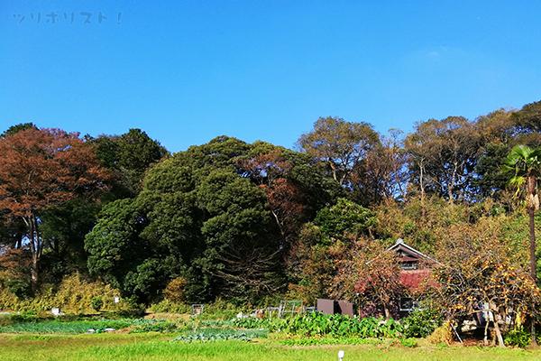 三村園002