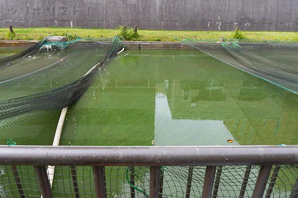 大横川親水公園031