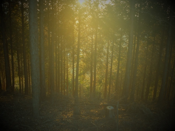 0123杉