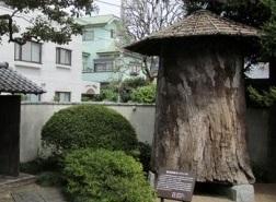 彫刻の原木