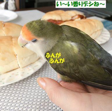 2018年10月もんちゃん5