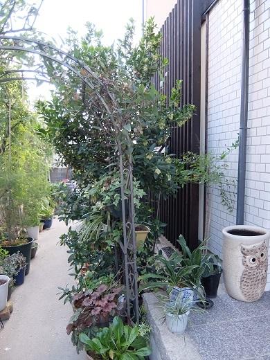 20181104_いちごの木