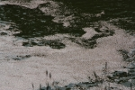 1.皇居の花見:千鳥ヶ淵-20D 1204q