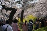 3.皇居の花見:千鳥ヶ淵の行列-03D 1904q