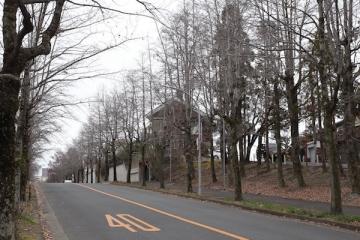 20190310三色彩道1_MG_2654