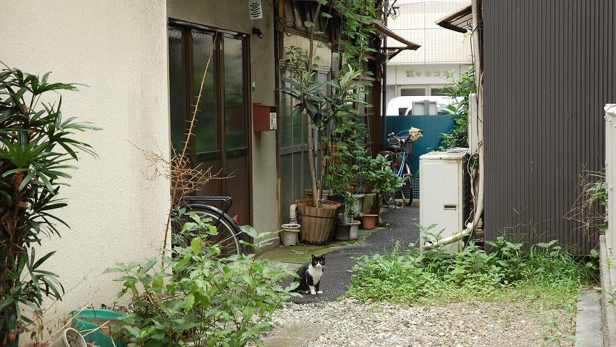 asakusabasi1601-190717-27.jpg