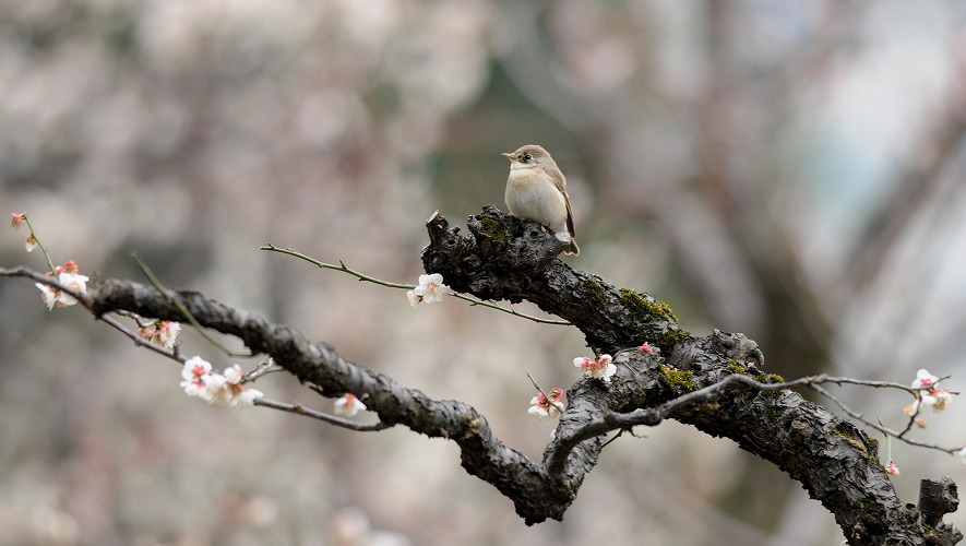 ojirobitaki7505-190306-04.jpg