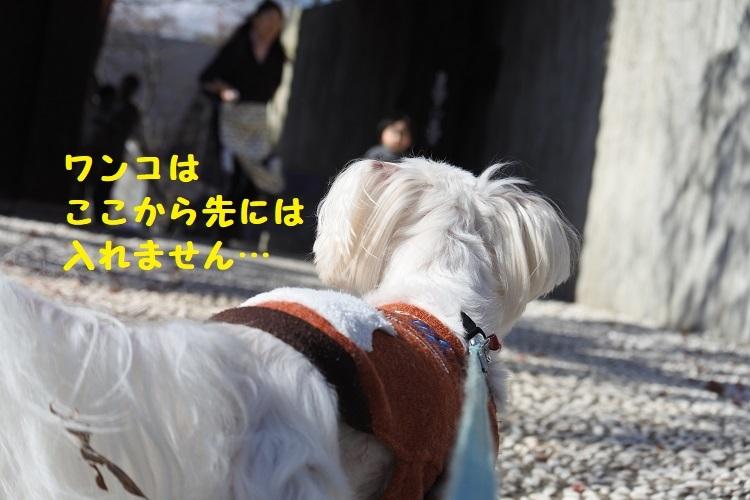 DSC_6898@ - コピー