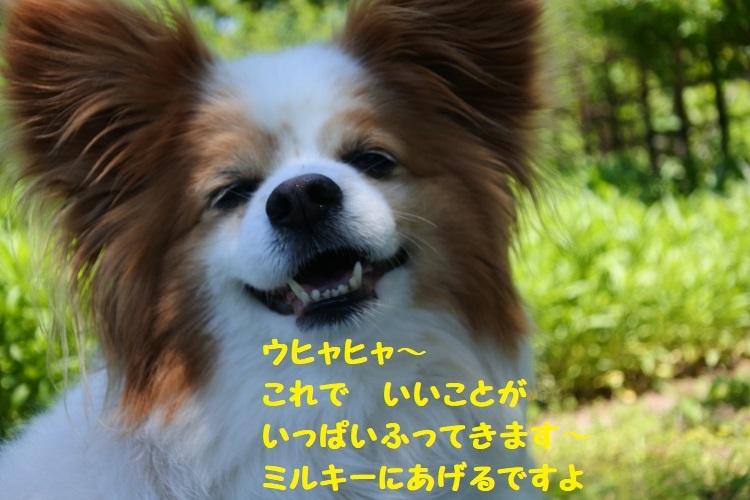 DSC_7921@