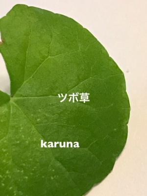 image1(3).jpeg