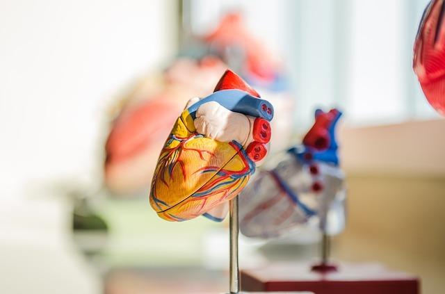 heart-2607178_640.jpg