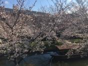 190402桜の花