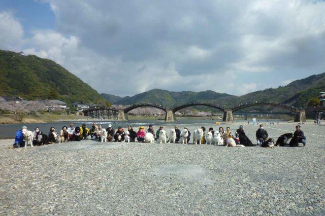 錦帯橋バック1