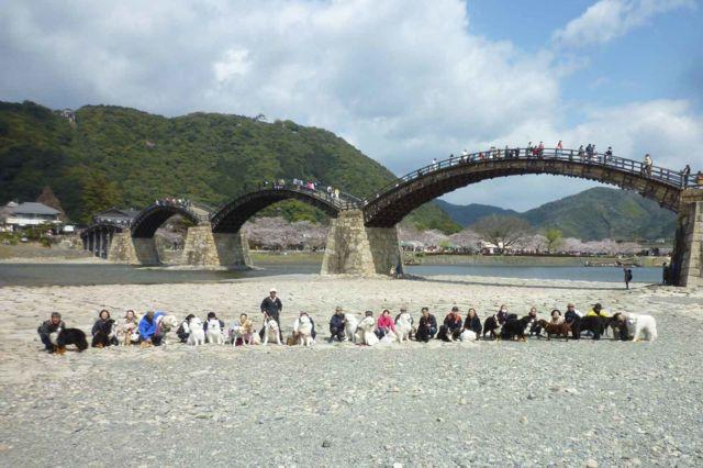 錦帯橋バック2