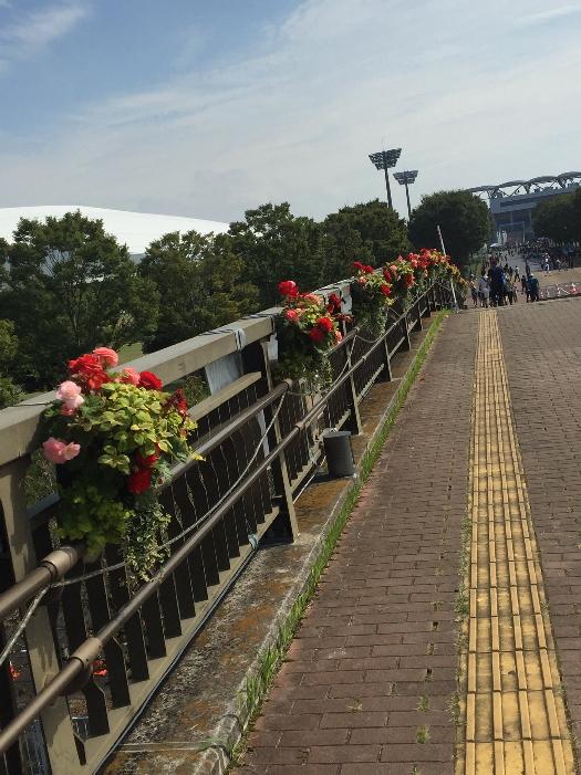 ラグビー場お花