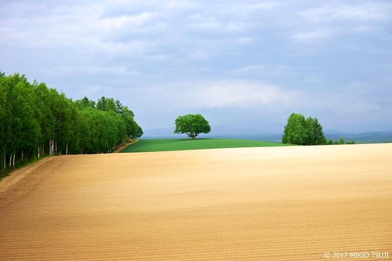 0283 丘の四角い木の風景 (北海道 美瑛町)