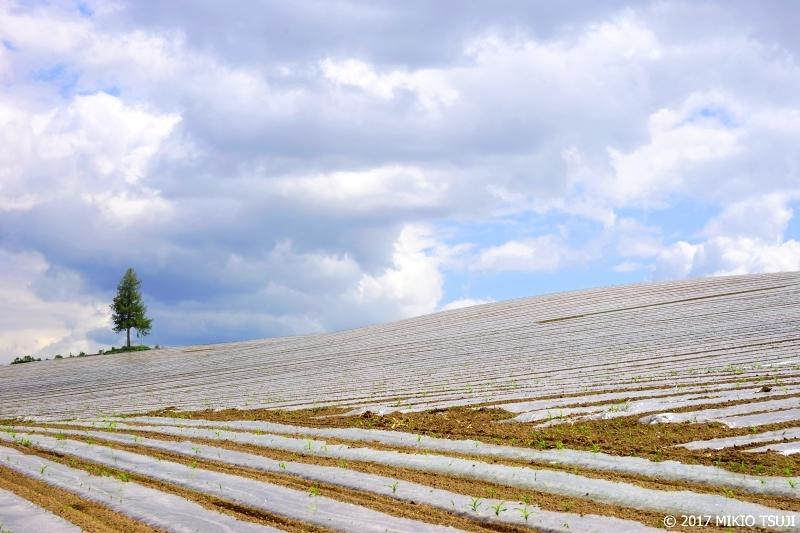 0284 初夏の白銀の丘 (北海道 美瑛町)