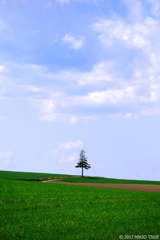 0291 孤独な木と影 (北海道 美瑛町)